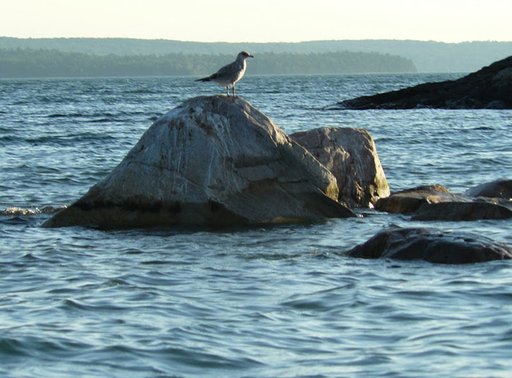 Seagull on a rock in the Lake