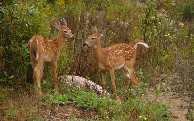 nature-wildlife-img
